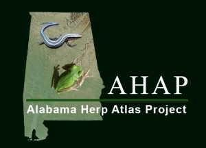 AHAP Logo in Green