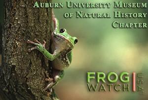 FrogWatch Logo